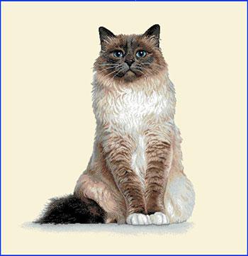 Наволочка Le Gobelin Бирманская кошка 44х44 0641