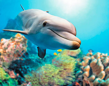Фото - Алмазная мозаика Цветной ''Добрый дельфин'' (40х50) на подрамнике lg222 алмазная мозаика цветной букет нежных цветов 40х50 на подрамнике lg104