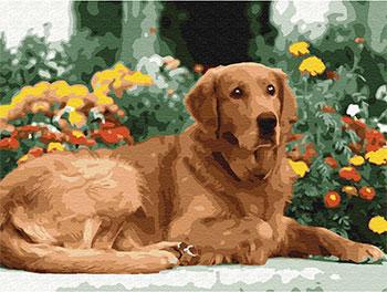Фото - Картина по номерам Molly с цветной схемой на холсте (30х40) ЗОЛОТИСТЫЙ РЕТРИВЕР (18 цветов) на подрамнике KK0602 картина по номерам с цветной схемой на холсте 30х40 кот рокер 19 цветов kk0610